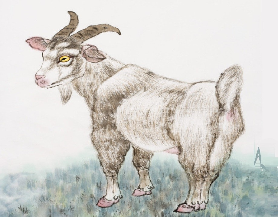 A goat in the farm